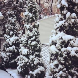b2ap3_thumbnail_snow-on-trees.jpg